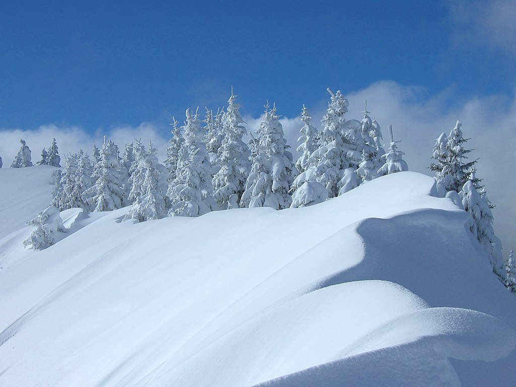 In sila comparsa la prima neve - Immagini da colorare la neve ...
