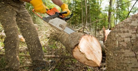 taglia alberi