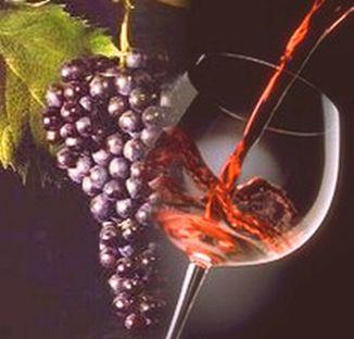 vinonovello