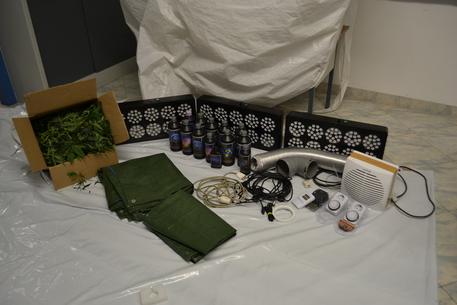 Droga: coltiva marijuana in stanza appartamento, arrestato