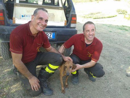 Vigili del fuoco di Melito Porto Salvo salvano cane precipitato in dirupo