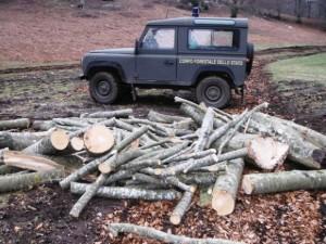 corpo foresta legna taglio abusivo