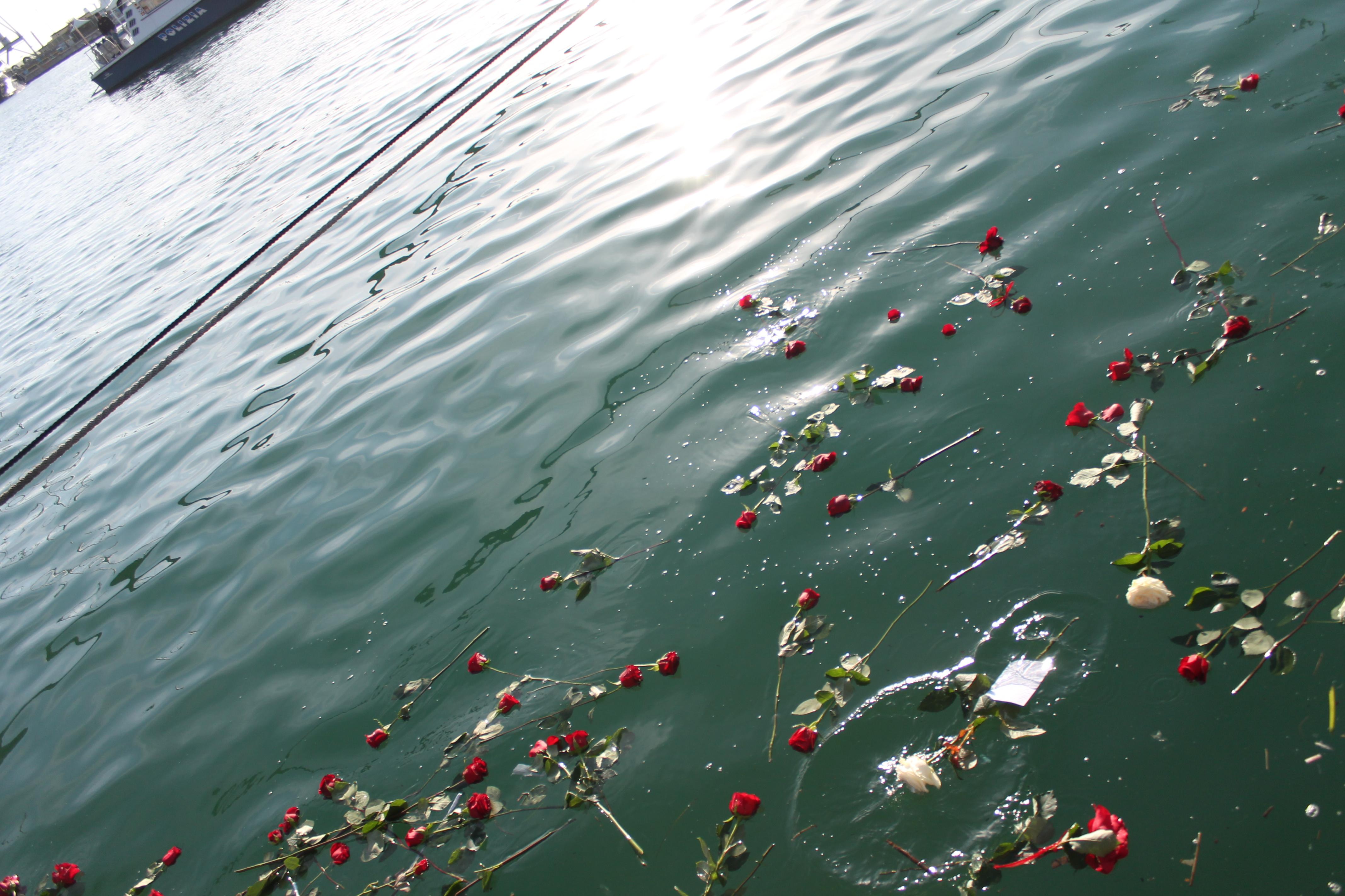 rose in acqua