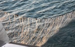 rete pesca