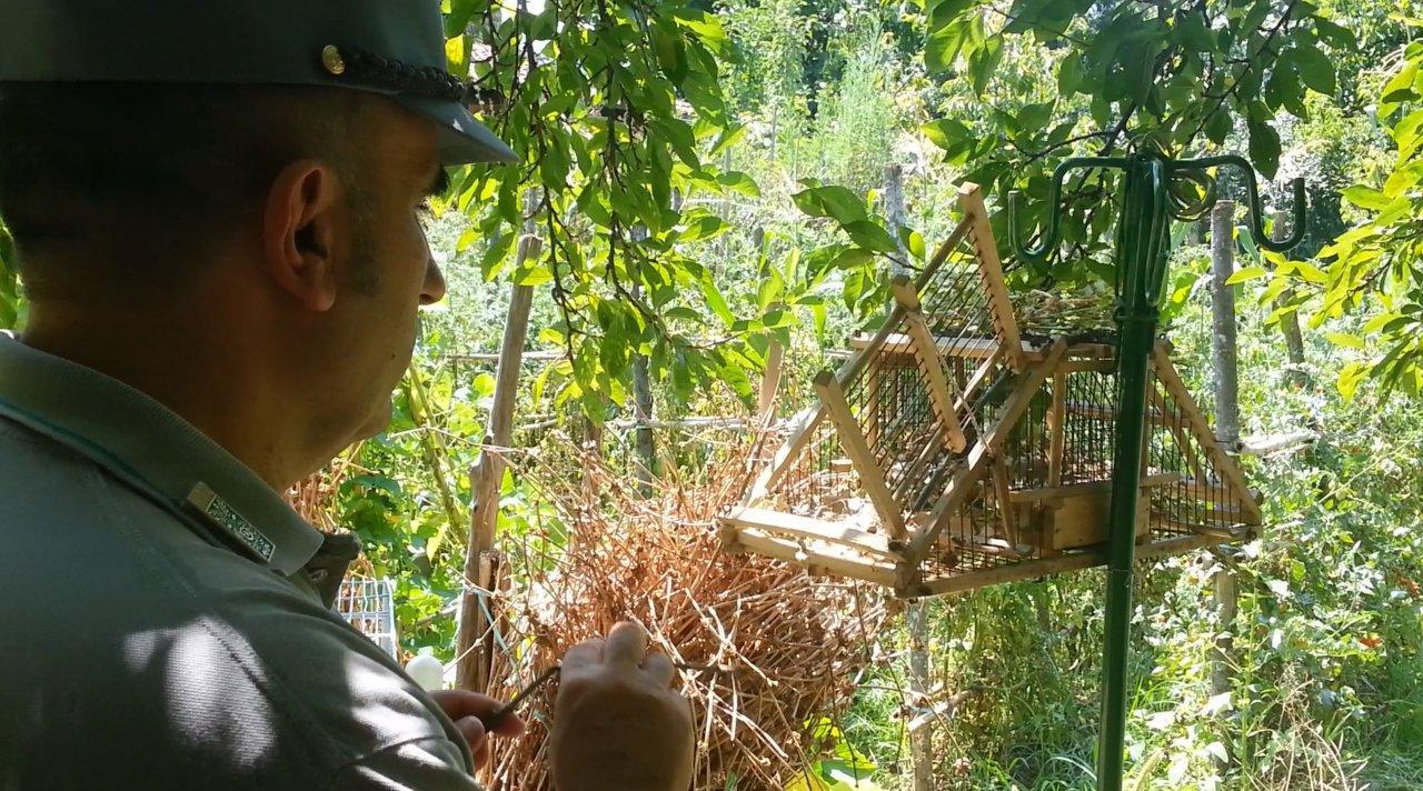 forestale uccellaggione