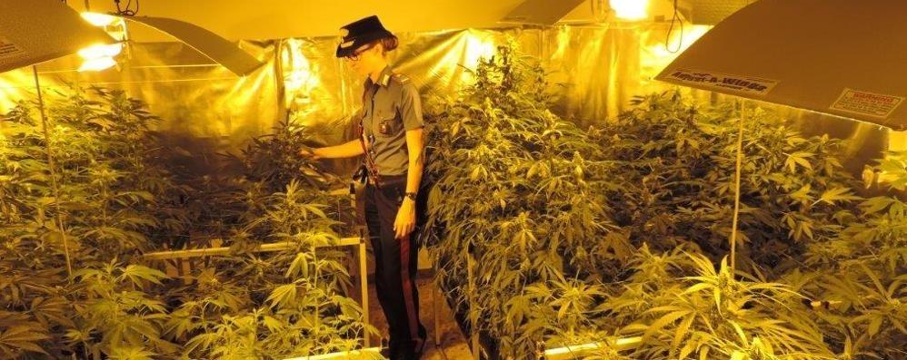 piantagione-di-marijuana-in-casablitz-dei-carabinieri-un-arresto-a-bolgare_ce09a902-27c8-11e5-aa79-6f3e13832a49_998_397_big_story_detail