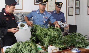piantagione-marijuana-lusignano-217808-660x368