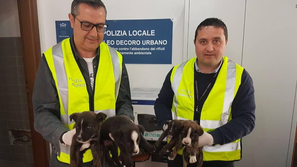 Cuccioli salvati