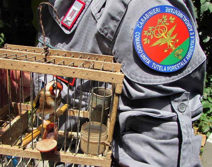 Caccia: attività venatoria illegale (foto ansa.it)