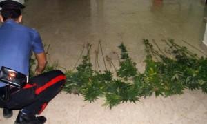 marijuana_carabinieri