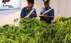 Foto Carabinieri Rende.