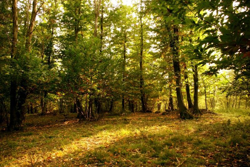 bosco -di-castagno