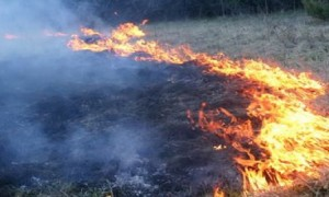 sterpaglie- incendio